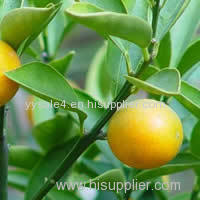 100% pure natural 98% Naringin by HPLC/ Grapefruit Extract