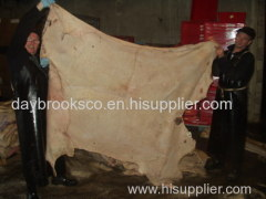 animal hides and skins