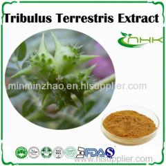 Tribulus Terrestris Extract 40%-90% Saponins
