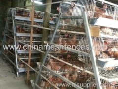 A type layer chicken cage galvanized wire mesh layer chicken cage