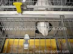 young & female rabbit cage galvanized wire mesh rabbit cage Kenya rabbit cage