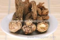 High Quality Angelica Root Extract