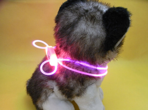 LED PP Dog Collar