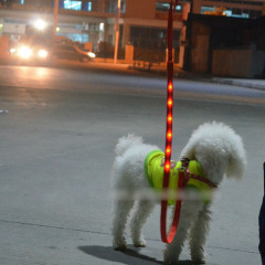 LED Dog Leash led