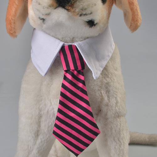 Gentleman Look Pet Tie