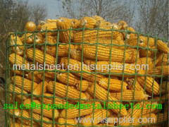 Expanded Metal Corn Cage