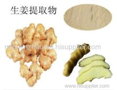 High Quality Ginger root extract Powder