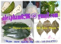 GRAVIOLA SOURSOP LEAVES SEED PULP PUREE FRUIT / guanabana