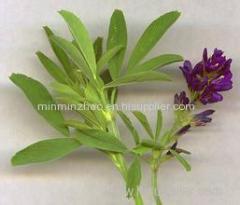Alfalfa extract alfalfa powder