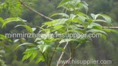 High quality vine tea extract