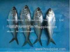 FROZEN PACIFIC SARDINE Fish