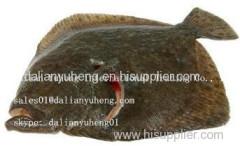 FROZEN TURBOT FISH Fillet