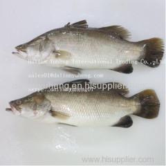 FROZEN BARRAMUNDI FISH FILLET