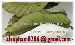 Durian Leaves / Guava Leaf/ Moringa Leaves / Tea Leaf