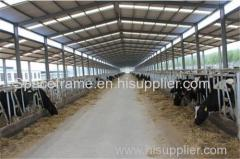 low cost steel structure for chicken or cow shed farm