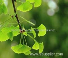 Ginkgo Biloba Extract with Ginkgetin Ginkgolides