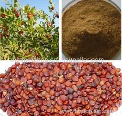 Jujube Seed Extract with Jujuboside 2%-5%