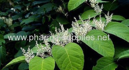 High Qualtiy Resveratrol powder sales price wholesale service OEM