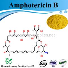 Antibacterial Amphotericin B price