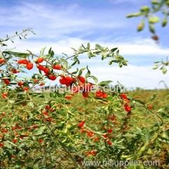 cinese secca bacca di goji wolfberry Ningxia