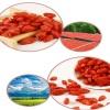 Dried goji berries Chinese wolfberry