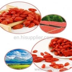 Secado goji bayas chino wolfberry
