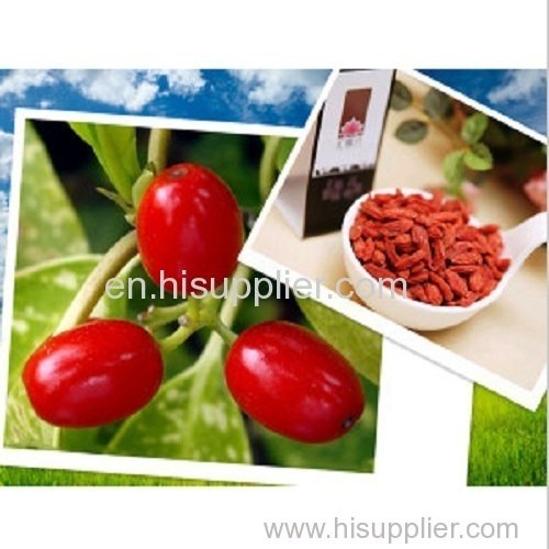 Dired Goji Berry Origined From Ningxia China