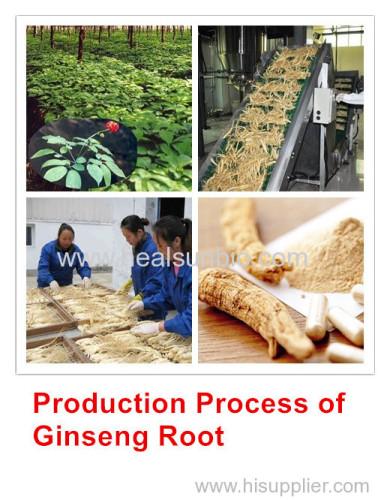 No pesticide residue Organic Panax Ginseng Root