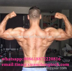 Top Quality Injectable Steroids Andriol Testosterone Undecanoate (Undecanoate 500)