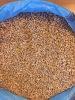 Top quality Ukraine Wheat
