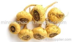 Maca Root Extract - 4:1 and 5:1