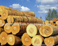 Export import Wood import to shenzhen customs clearance