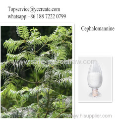 Taxus Extract Cephalomannine Powder