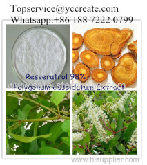 98% Giant Knotweed Extract Resveratrol