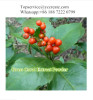 Plant Extract Fumaricacid Raw Isofraxidin with 0.5% Purity