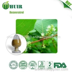 High quality giant knotweed extract/giant knotweed extract bulk resveratrol