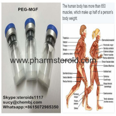 98.0% Human Growth Peptides PEG-MGF Increased Lean Muscle And Fat Loss