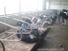 High Quality Cow Free Stall