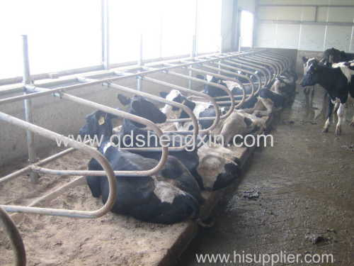 Cattle Free Stall with high quality