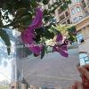 Professional Manufacturer Special Transparent Plastic Sheet Plate