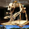 Museum quality cheap dinosaur skeleton replicas