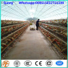 export Kenya galvanized chicken cages chicken farm hot sale A Type layer poultry battery cages