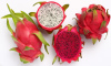 Fresh Dragon Fruit- Dragon Fruit High Quality