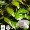 Dihydromyricetin/ Vine Tea Extract