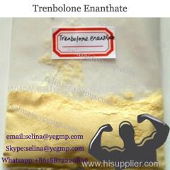 BodyBuilding steroid powder Trenbolone Enanthate Tren E