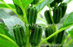 Sesamin Sesame Seed Extract