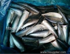 mackerel HGT HGT mackerel pacific mackerel HGT scomber japonicus HGT Frozen mackerel HGT