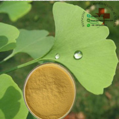 Hot Sale Pharmaceutical Raw Materials Ginkgo Biloba Extract 90045-36-6