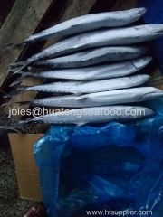 2017 new popular frozen spanish mackerel whole round for market with competitive price from China