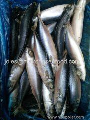 frozen sardine/ sardinella longiceps whole round on sale for canning and bait